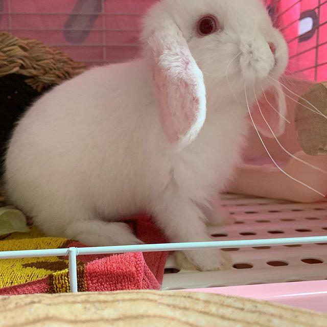 新しい家族ウサギのまる君です!一目惚れしました。癒されます。#ebi江口魚株式会社 #ウサギのいる暮し #赤目 #かわいい #癒し #家族が増えました #佐賀県 #暑い #いいね (Instagram)